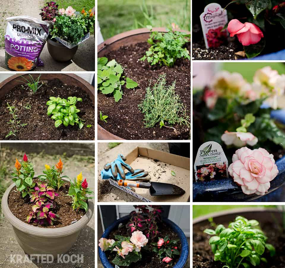 planting flowers and herbs